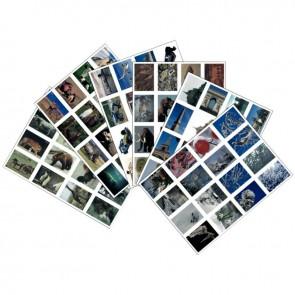 Lot de 96 images en planche dimensions 6 x 8 cm